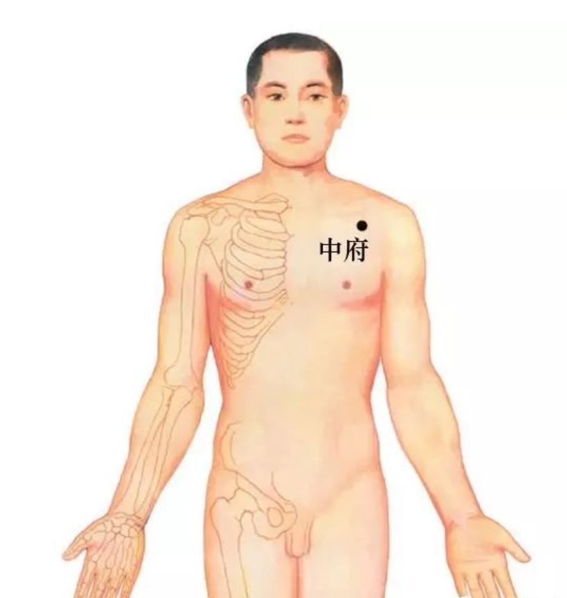 中医针灸-手太阴肺经:中府